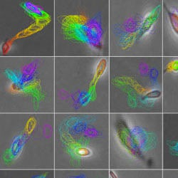 Predicting the Fate of Stem Cells
